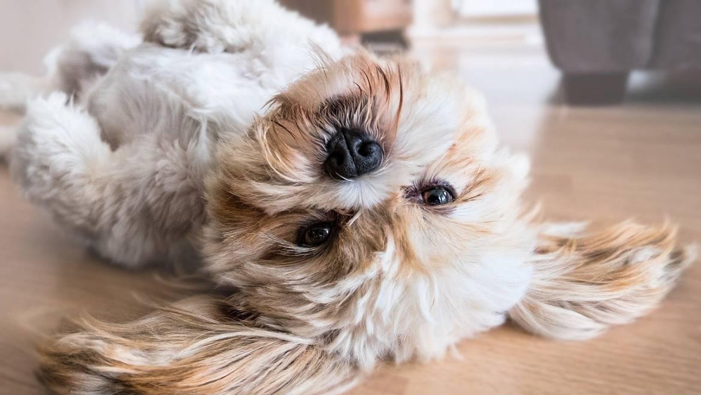 Convivir con mascotas ayuda a nuestra salud mental, ¡sí o sí!